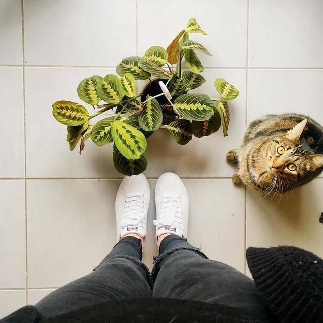 Maranta leuconeura #mantara #marantaleuconeura #greenplant #plants #cat #legs #stansmith #shoes #loveplants #lovenature #newplant