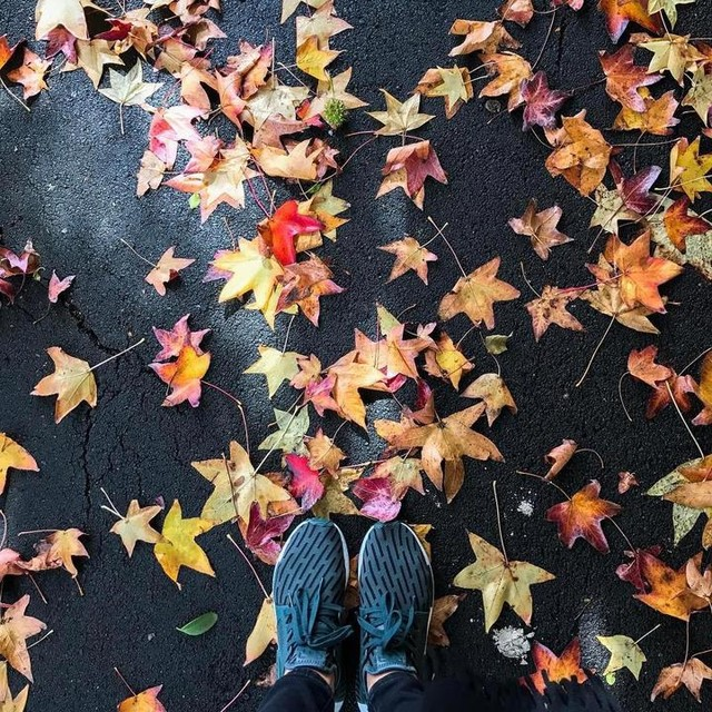 I don't want winter to arrive #autumn #autumnleaves #nmd #adidas