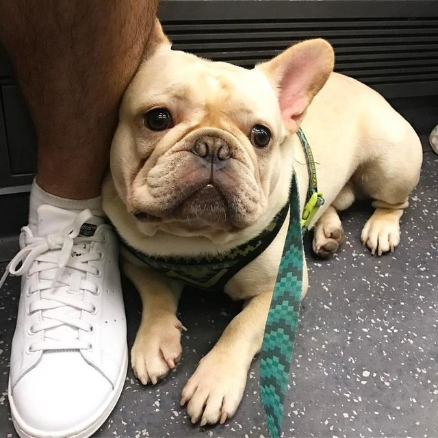 Please don't leave me Daddy! #sadface #stansmith #londonunderground