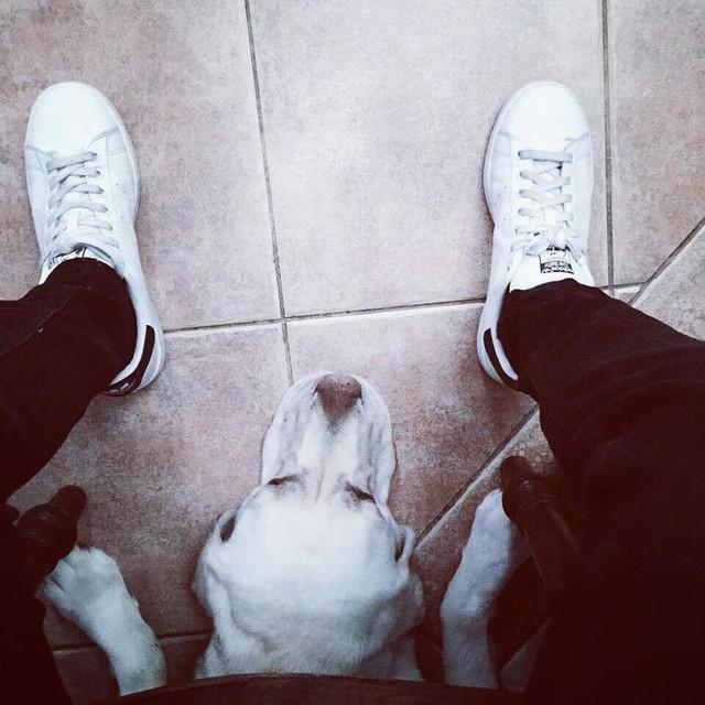 """True love..always by my side (or underneath me)"" #lab #labrador #lablove #lablovers #bymyside #truelove #friendship #friends #adidas #stansmith #blackandwhite"